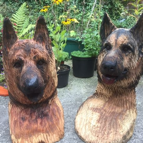 German shepherd busks