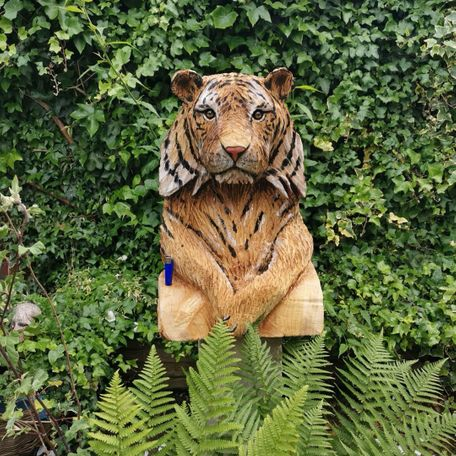 male tiger bust, life size, see lighter for scale