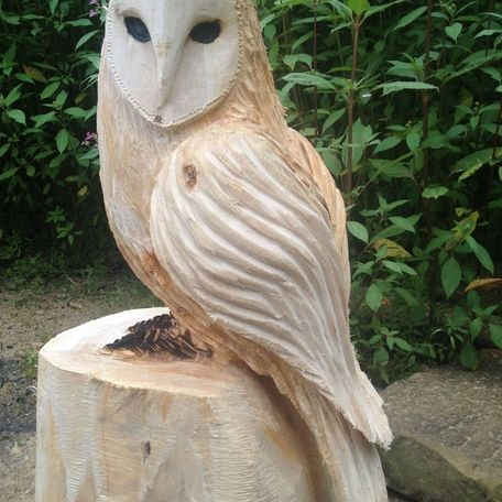 Front of the barn owl